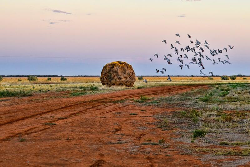Corynnia-Station-Birds-Rocks